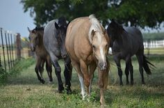 If you were a horse, what color would you be? Take our quiz to find out! (Link…