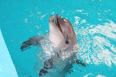 İstanbul Dolphinarium Yunus Gösteri Merkezi / Yunuslarla yuzme (Eyup)