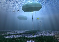 Carnegie Wave Energy is bringing their clean energy and desalination technology to the UK // @inhabitat