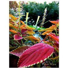 Trademark Art Magical Garden II Canvas Art by Kathie McCurdy, 24x32, Multicolor