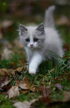 (via Juliane Meyer), small Hunter, killing, Kitty, Kitten, Pet, cute, nuttet, adorable, precious, sweet, grass, photo