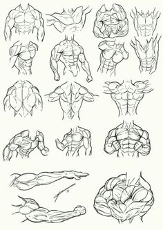 Muscle guide I think?