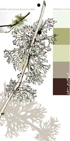 Lichen (Evernia Prunastri) on Alder by Sam Pickard. Lichen green color