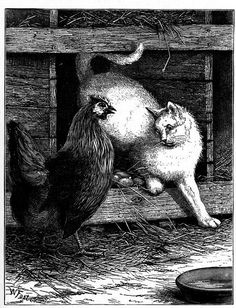 Cat & Chicken Drawing - Vintage Cat Drawing