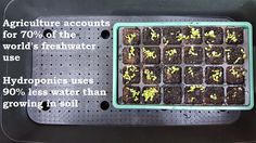 Hydroponic Growing, Growing Plants, Organic Hydroponics, Compost Tea, Water Efficiency, Fun To Be One, Agriculture, Fresh Water, Sustainable Gardening