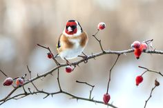 Image result for winter birds