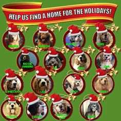 WON'T YOU PLEASE HELP US FIND A HOME FOR THE HOLIDAYS??? Visit www.nyabandonedangels.com to submit an online application to foster or adopt, or email rescue@nyabandonedangels.com to request one. Special thanks to Brenda S. for creating this fun graphic for us.