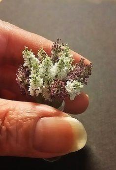 #Miniature #Flowers Lilacs