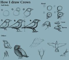 How I draw Crows by CreatTheCrow on DeviantArt Gothic Drawings, Bird Drawings, Easy Drawings, Animal Drawings, Drawing Animals, Basic Drawing, Step By Step Drawing, Drawing Sketches, Drawing Meme
