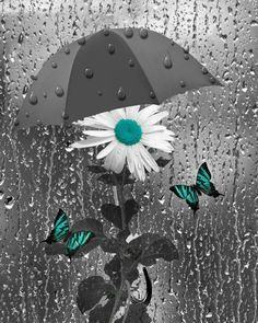 Black White Teal Daisy Flower Butterfly by LittlePiePhotoArt