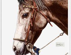 """Ta en kikk på dette @Behance-prosjektet: """"horse"""" https://www.behance.net/gallery/16210407/horse"""