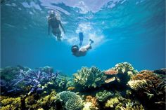 The colorful reefs of the Great Barrier Reef in Australia are a remarkable underwater sanctuary. See more Bucket List worthy UNESCO sites at http://www.covingtontravel.com/2016/03/bucket-list-worthy-unesco-world-heritage-sites/?utm_source=pinterest&utm_medium=share&utm_campaign=blog