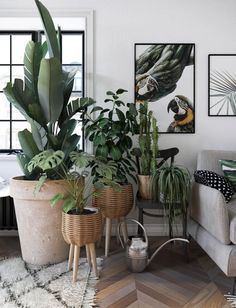 Living Room Plants, Room With Plants, House Plants Decor, Big Plants, Interior Design Living Room, Indoor Plants, Living Room Decor, Design Room, Balcony Plants