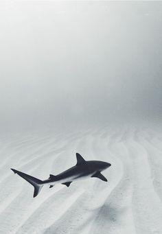 Shark near the sand