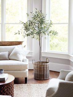 Indoor olive tree with wicker basket in neutral living room on Thou Swell @thouswellblog
