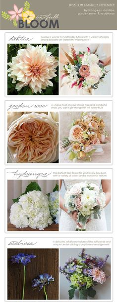 In Full Bloom: What's in Season - September - The Collection Event Studio - The Collection - A Wine Country Wedding & Event Studio Showcasing a Curated Collection of Vendors & Venues wedding flowers Vintage Wedding Flowers, Floral Wedding, Wedding Colors, Wedding Bouquets, Vintage Weddings, Lace Weddings, Trendy Wedding, Fall Wedding, Dream Wedding