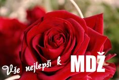 Choosing Your Wedding Flowers - Aspire Wedding Types Of Flowers, Real Flowers, Amazing Flowers, Silk Flowers, Colorful Flowers, Greek Wedding, Rose Wedding, Wedding Flowers, Wedding Dresses