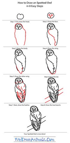 How to draw a spotted owl Pinned by www.myowlbarn.com