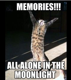 Tuesday Cat Humor