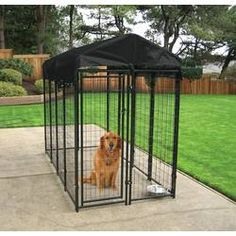 Archie & Oscar™ Abigail Steel Yard Kennel & Reviews | Wayfair Wire Dog Kennel, Pet Kennels, Lucky Dog Kennel, Dog Playpen, Dog Kennel Cover, Dog Pen, Pet Resort, Dog Cages, Outdoor Dog