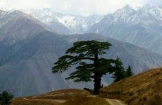 Gol national park Chitral