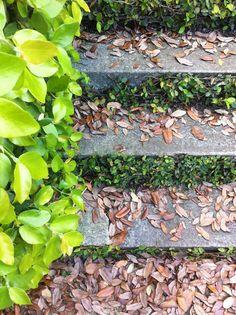 Angrily crunchy crinkly leaves, Charleston, South Carolina May 2012