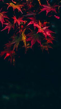 Imagem de background, black, and leaf