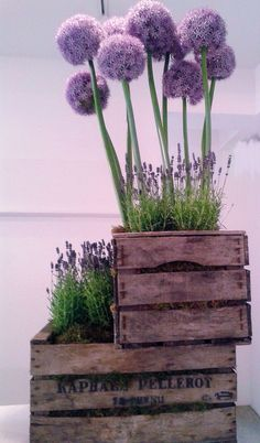 Alium and Lavanda centrepiece in wooden crates love this look @An Enchanted Florist at Skippack Village