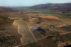 Wines of South Africa - Wineries Touring, Wines, South Africa, Westerns, Vineyard, Photo Galleries, Country Roads, Gallery, African