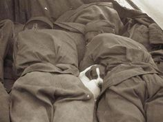 sleeping soldiers and puppy