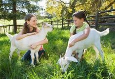 Male and Female Goats   Once you have decided which breed you want to raise, you must decide which gender you want. For breeding purposes, it makes sense to get both male and female goats, but there are certain advantages and disadvantages of both breeds