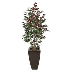 House of Silk Flowers Ficus Tree in Planter Base Color: Gloss Brown, Leaves Color: Red (Capensia)