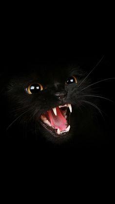 Black Cat Roar ♥g♥