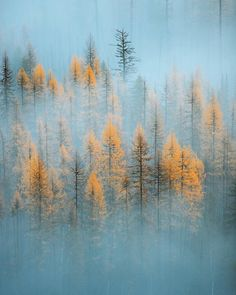 In love with foggy day. by forrestmankins 🌲 Cool Pictures, Cool Photos, Amazing Photos, Scenery Photography, Amazing Photography, Destinations, Misty Forest, Autumn Scenery, Tree Tops