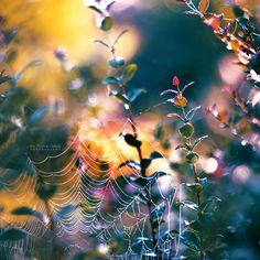 Early Autumn by John-Peter.deviantart.com on @DeviantArt