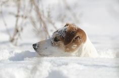 ❅Up to his nose in SNOW