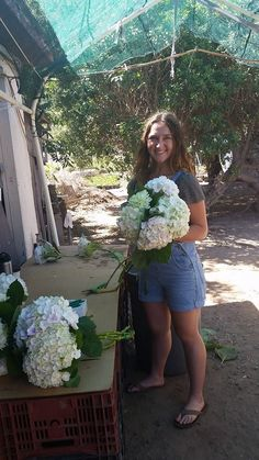 So wonderful to have my daughter Natalie stop by to help us get our hydrangea orders out today ...Thursday 8-28-14