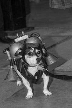 Steampunk Wedding Dog!!