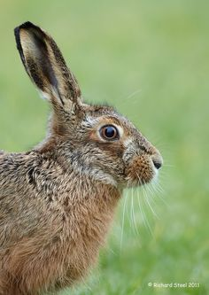 Wildlife Photographic Journals Pet Rabbit, Guinea Pigs, Art World, Animal Photography, Pet Birds, Animal Pictures, Photo Art, Your Pet, Wildlife