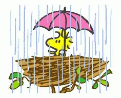 The perfect Snoopy Woodstock Rain Animated GIF for your conversation. Discover and Share the best GIFs on Tenor. Snoopy Comics, Gifs Snoopy, Snoopy Images, Snoopy Pictures, Snoopy Quotes, Peanuts Cartoon, Peanuts Snoopy, Snoopy Gifts, Snoopy Und Woodstock