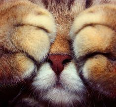 An up-close photo of a cat's face with its paws over its eyes.