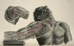 """Richard Quain  (http://www.pinterest.com/pin/287386019946913547/). Joseph Maclise.  """"The anatomy of the arteries of the human body, with its applications to pathology and operative surgery"""" (1844 pinterest.com/pin/287386019946919258/)."""