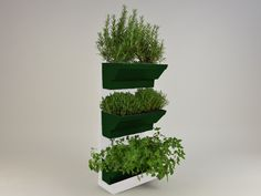 Indoor Herb walls a solution to grow herbs in tidied and spectacular conditions in your kitchen or at your garden. Using fresh and living herbs not only good for healthy and tasty foods but for healthcare and home cosmetics, like facemask or herbal teas. http://goo.gl/6rMSB4 Details: white frame white table drak green plant's box 45×60 cm / 17,7×23,6 inches easy to fit water holder system