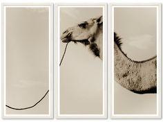 igor the camel