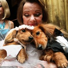 Bow WOW: Dachshund Dogs Dee Dee (left) and her cousin Clifford (right) were dressed to impress by their owner Valerie Dikerto attend Chilly and Baby Hope Diamond's Wedding