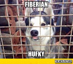 Funny pictures about If Moon Moon And Phteven Had A Baby. Oh, and cool pics about If Moon Moon And Phteven Had A Baby. Also, If Moon Moon And Phteven Had A Baby photos. Husky Humor, Funny Husky Meme, Dog Quotes Funny, Funny Animal Memes, Dog Memes, Funny Animal Pictures, Funny Dogs, Funny Animals, Cute Animals