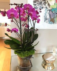 Orchids – Home Decor Gardening Flowers Orchids In Water, Indoor Orchids, Orchids Garden, Flowers Garden, Orchid Planters, Orchid Pot, Moth Orchid, Fall Planters, Exotic Flowers