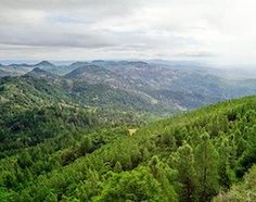 Visit Robert Louis Stevenson State Park and hike to to the top of Mt. St.Helena in Napa Valley for an amazing view.