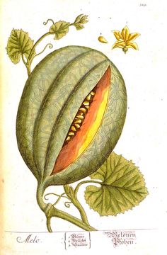 Plants and Gardens Portrayed: Rare and Illustrated Books from The LuEsther T