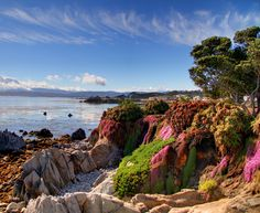 This photo captures Pacific Grove, California perfectly, wish I had taken it lol!
